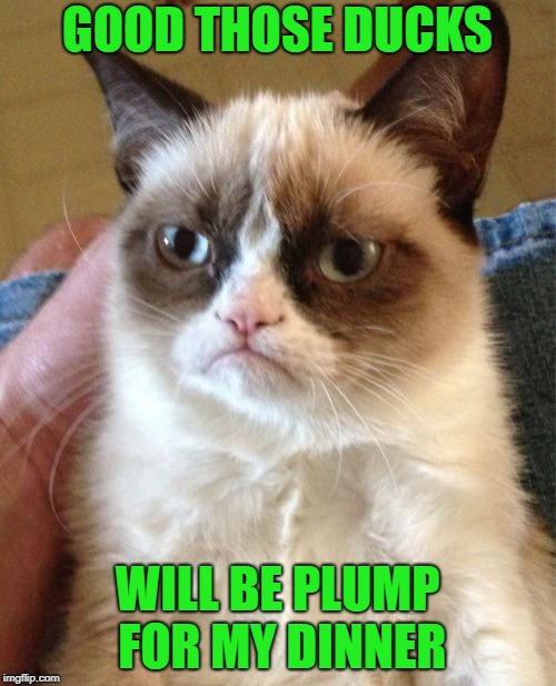 Grumpy Cat Meme | GOOD THOSE DUCKS WILL BE PLUMP FOR MY DINNER | image tagged in memes,grumpy cat | made w/ Imgflip meme maker