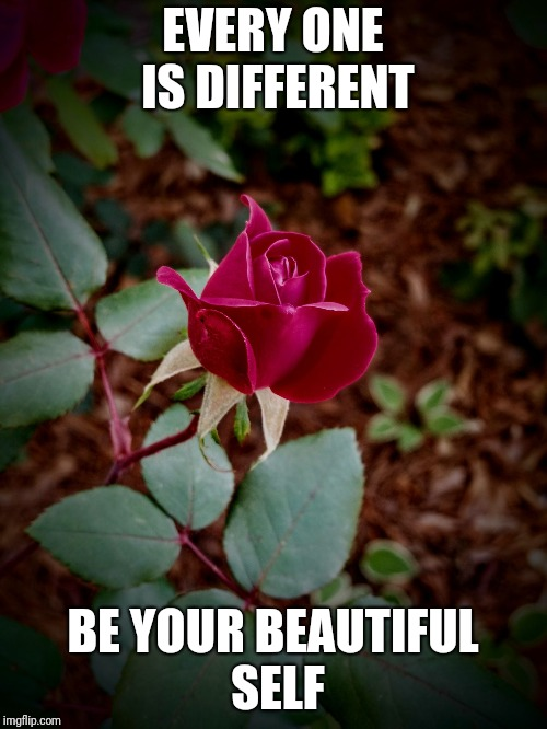 EVERY ONE IS DIFFERENT BE YOUR BEAUTIFUL SELF | image tagged in garden rose | made w/ Imgflip meme maker