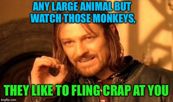 One Does Not Simply Meme | ANY LARGE ANIMAL BUT WATCH THOSE MONKEYS, THEY LIKE TO FLING CRAP AT YOU | image tagged in memes,one does not simply | made w/ Imgflip meme maker
