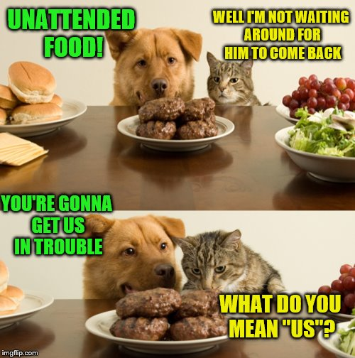 "When the human is away... | UNATTENDED FOOD! WHAT DO YOU MEAN ""US""? WELL I'M NOT WAITING AROUND FOR HIM TO COME BACK YOU'RE GONNA GET US IN TROUBLE 
