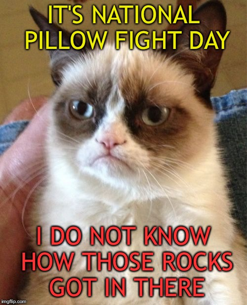 Fight nice kids. | IT'S NATIONAL PILLOW FIGHT DAY I DO NOT KNOW HOW THOSE ROCKS GOT IN THERE | image tagged in memes,grumpy cat,pillow,funny | made w/ Imgflip meme maker