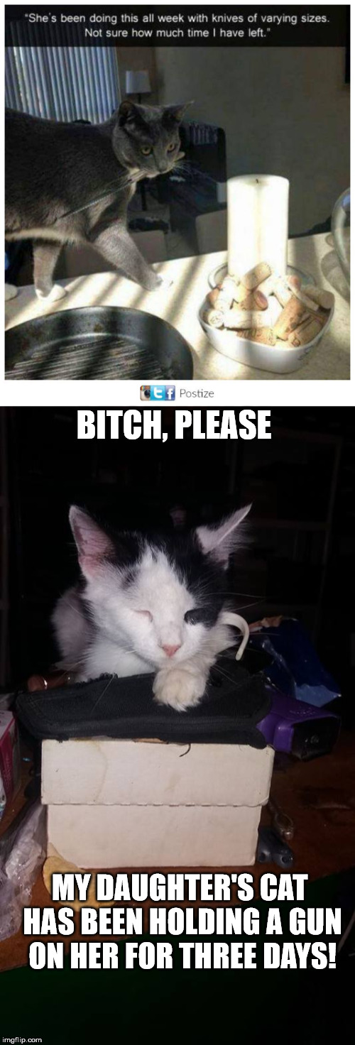 Meet Phantom, my daughter's feral cat | B**CH, PLEASE MY DAUGHTER'S CAT HAS BEEN HOLDING A GUN ON HER FOR THREE DAYS! | image tagged in cat,knife,gun,danger will robinson | made w/ Imgflip meme maker