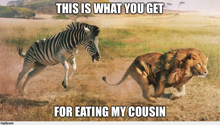 THIS IS WHAT YOU GET FOR EATING MY COUSIN | image tagged in zebra chasing a lion | made w/ Imgflip meme maker