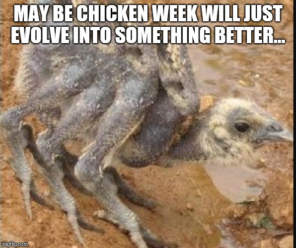 MAY BE CHICKEN WEEK WILL JUST EVOLVE INTO SOMETHING BETTER... | made w/ Imgflip meme maker