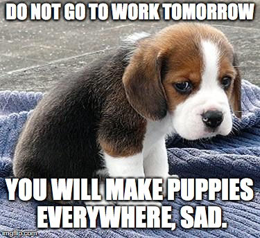 monday has been cancelled. | DO NOT GO TO WORK TOMORROW YOU WILL MAKE PUPPIES EVERYWHERE, SAD. | image tagged in sad puppy,monday | made w/ Imgflip meme maker
