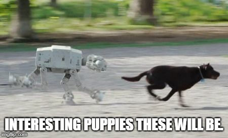 dog chase | INTERESTING PUPPIES THESE WILL BE. | image tagged in dog chase | made w/ Imgflip meme maker