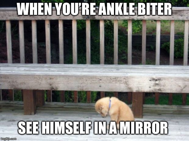Sad Puppy | WHEN YOU'RE ANKLE BITER SEE HIMSELF IN A MIRROR | image tagged in sad puppy | made w/ Imgflip meme maker