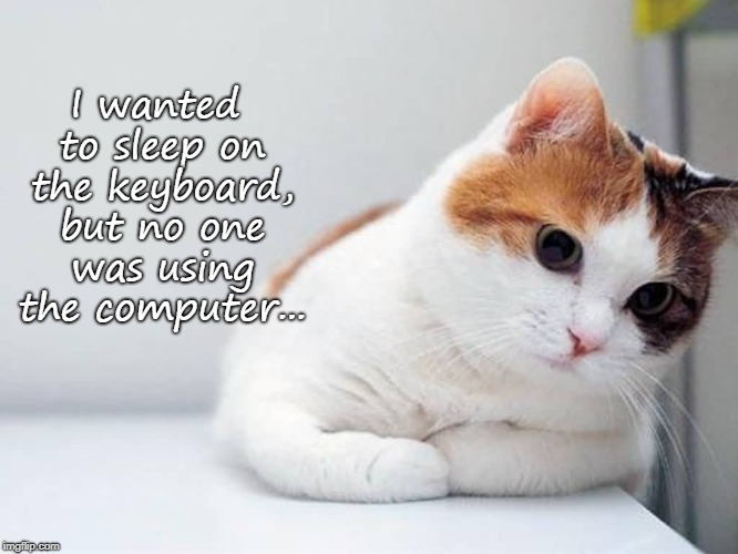 Foiled again... | I wanted to sleep on the keyboard, but no one was using the computer... | image tagged in sleep,keyboard,cat,kitten,computer | made w/ Imgflip meme maker