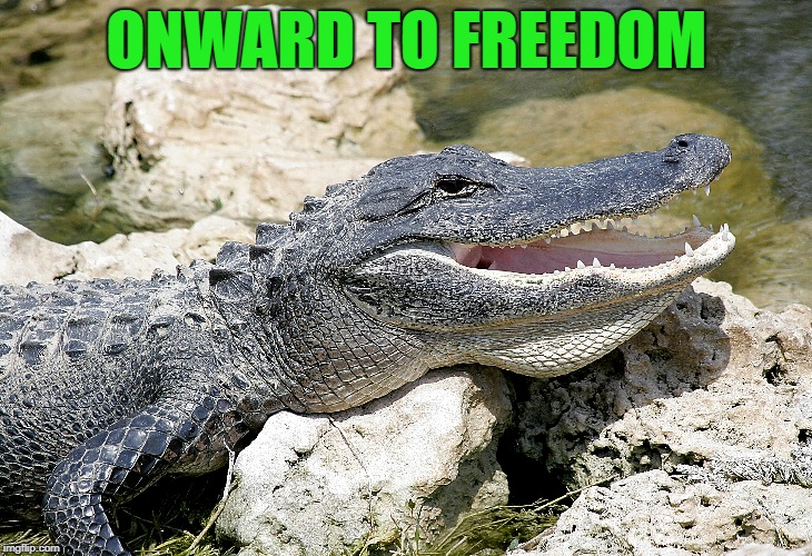 ONWARD TO FREEDOM | made w/ Imgflip meme maker
