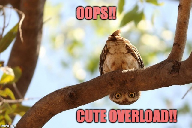OOPS!! CUTE OVERLOAD!! | made w/ Imgflip meme maker
