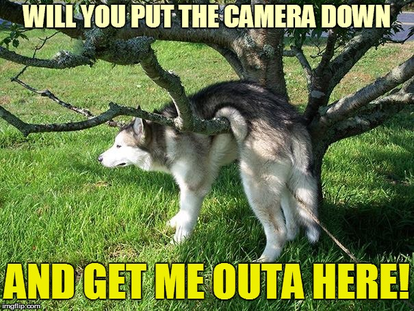 lifesucks | WILL YOU PUT THE CAMERA DOWN AND GET ME OUTA HERE! | image tagged in lifesucks | made w/ Imgflip meme maker