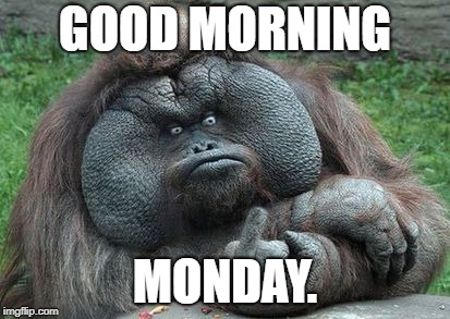 Monday Monkey | GOOD MORNING MONDAY. | image tagged in monday monkey | made w/ Imgflip meme maker