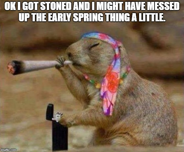 Ok i got stoned  | OK I GOT STONED AND I MIGHT HAVE MESSED UP THE EARLY SPRING THING A LITTLE. | image tagged in ground hog smoking weed | made w/ Imgflip meme maker