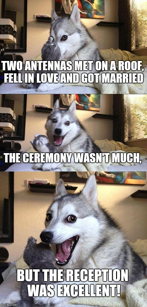 Bad Pun Dog Meme | TWO ANTENNAS MET ON A ROOF, FELL IN LOVE AND GOT MARRIED THE CEREMONY WASN'T MUCH, BUT THE RECEPTION WAS EXCELLENT! | image tagged in memes,bad pun dog | made w/ Imgflip meme maker