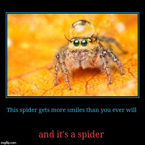Cute Spider | This spider gets more smiles than you ever will | and it's a spider | image tagged in funny,demotivationals | made w/ Imgflip demotivational maker