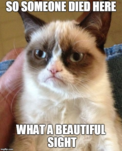Grumpy Cat Meme | SO SOMEONE DIED HERE WHAT A BEAUTIFUL SIGHT | image tagged in memes,grumpy cat | made w/ Imgflip meme maker