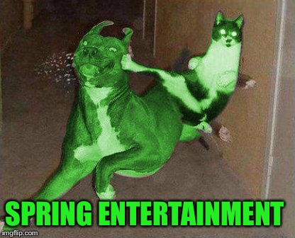 RayCat kicking RayDog | SPRING ENTERTAINMENT | image tagged in raycat kicking raydog | made w/ Imgflip meme maker