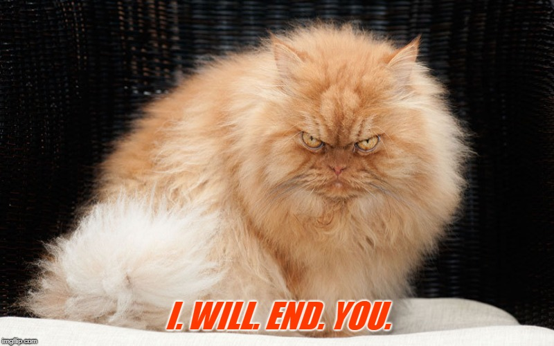 mean cat | I. WILL. END. YOU. | image tagged in mean cat | made w/ Imgflip meme maker