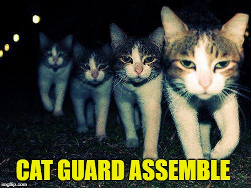 CAT GUARD ASSEMBLE | made w/ Imgflip meme maker