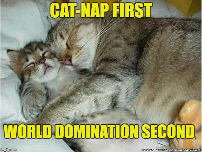 CAT-NAP FIRST WORLD DOMINATION SECOND | made w/ Imgflip meme maker