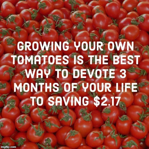 image tagged in tomatoes | made w/ Imgflip meme maker