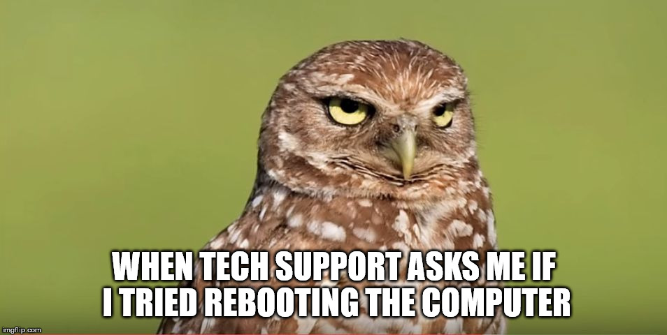 Death Stare Owl | WHEN TECH SUPPORT ASKS ME IF I TRIED REBOOTING THE COMPUTER | image tagged in death stare owl,tech support,stupid questions | made w/ Imgflip meme maker