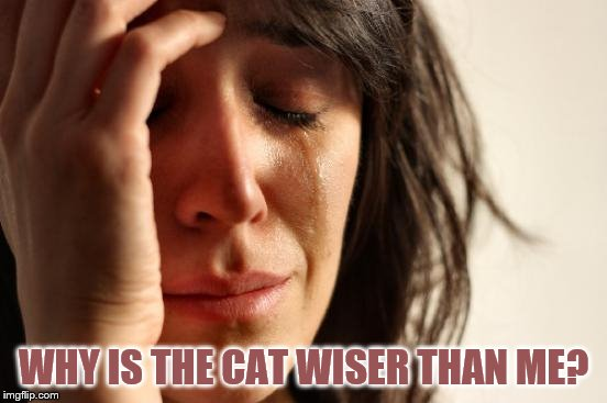 First World Problems Meme | WHY IS THE CAT WISER THAN ME? | image tagged in memes,first world problems | made w/ Imgflip meme maker