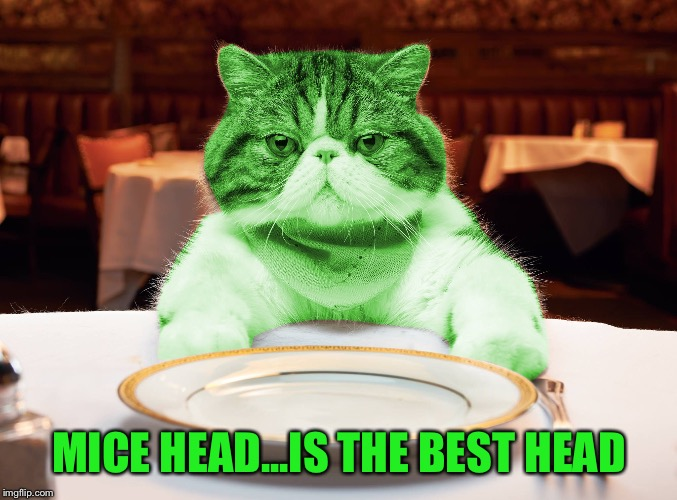 RayCat Hungry | MICE HEAD...IS THE BEST HEAD | image tagged in raycat hungry | made w/ Imgflip meme maker