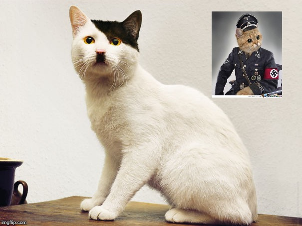 Hitler Cat | image tagged in hitler cat | made w/ Imgflip meme maker