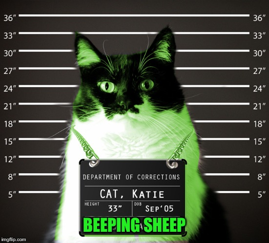 RayCat Incarcerated | BEEPING SHEEP | image tagged in raycat incarcerated | made w/ Imgflip meme maker