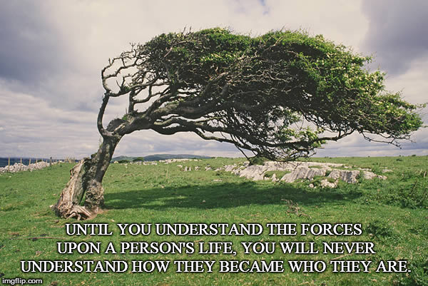Unseen Forces |  UNTIL YOU UNDERSTAND THE FORCES UPON A PERSON'S LIFE, YOU WILL NEVER UNDERSTAND HOW THEY BECAME WHO THEY ARE. | image tagged in tree,wind,unseen forces | made w/ Imgflip meme maker