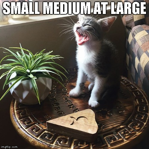 Petite gypsy wanted by the FBI.  (Cat weekend May 11 to 13 a JBmemegeek 1forcepeace and Landon_the_memer event.) | SMALL MEDIUM AT LARGE | image tagged in memes,cats,cat weekend | made w/ Imgflip meme maker