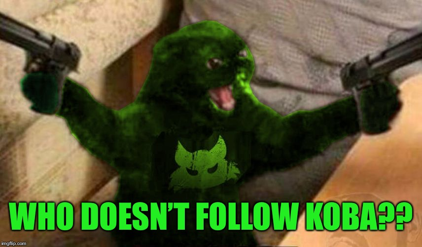 RayCat Angry | WHO DOESN'T FOLLOW KOBA?? | image tagged in raycat angry | made w/ Imgflip meme maker