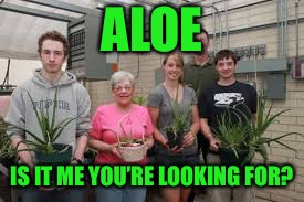 ALOE IS IT ME YOU'RE LOOKING FOR? | made w/ Imgflip meme maker