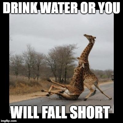 Giraffe falling  | DRINK WATER OR YOU WILL FALL SHORT | image tagged in giraffe falling | made w/ Imgflip meme maker