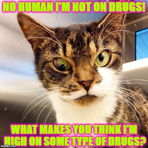 NO HUMAN I'M NOT ON DRUGS! WHAT MAKES YOU THINK I'M HIGH ON SOME TYPE OF DRUGS? | image tagged in meth cat | made w/ Imgflip meme maker