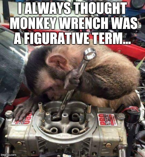 Monkey wrench  | I ALWAYS THOUGHT MONKEY WRENCH WAS A FIGURATIVE TERM... | image tagged in jbmemegeek,monkeys,funny animals,memes | made w/ Imgflip meme maker