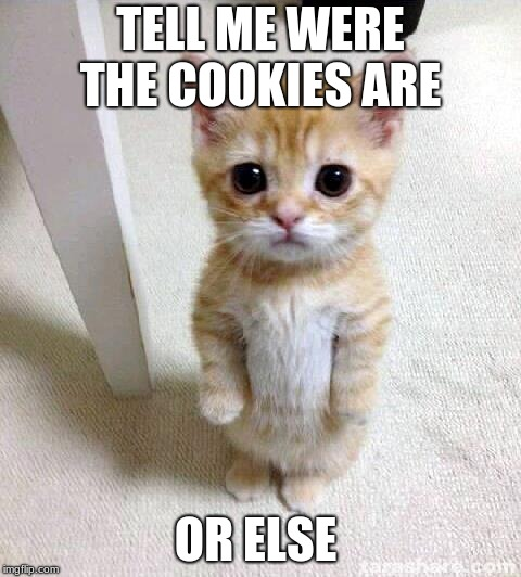 Cute Cat Meme | TELL ME WERE THE COOKIES ARE OR ELSE | image tagged in memes,cute cat | made w/ Imgflip meme maker
