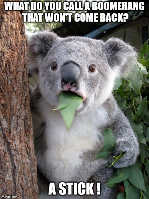 Surprised Koala Meme | WHAT DO YOU CALL A BOOMERANG THAT WON'T COME BACK? A STICK ! | image tagged in memes,surprised koala | made w/ Imgflip meme maker