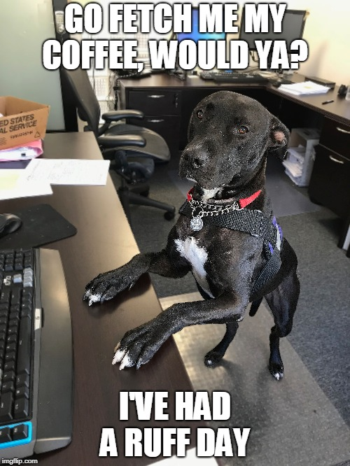 RAIDER MEME  | GO FETCH ME MY COFFEE, WOULD YA? I'VE HAD A RUFF DAY | image tagged in coffee,rough day,raider meme | made w/ Imgflip meme maker