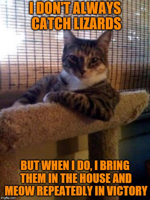 The Most Interesting Cat In The World | I DON'T ALWAYS CATCH LIZARDS BUT WHEN I DO, I BRING THEM IN THE HOUSE AND MEOW REPEATEDLY IN VICTORY | image tagged in memes,the most interesting cat in the world,lizard,meow | made w/ Imgflip meme maker