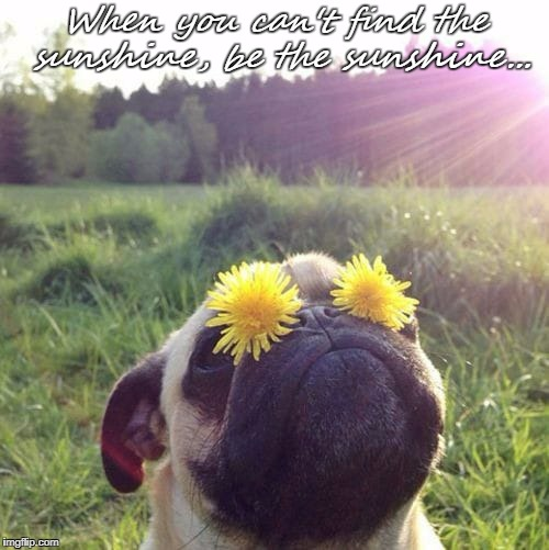 When you can't find the sunshine, be the sunshine... | image tagged in sunshine | made w/ Imgflip meme maker