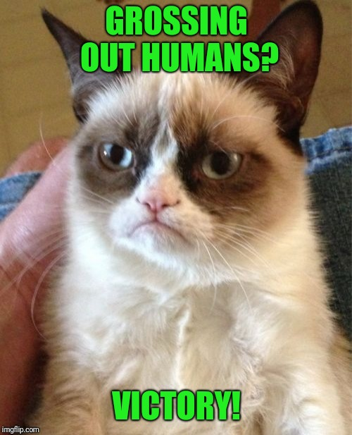 Grumpy Cat Meme | GROSSING OUT HUMANS? VICTORY! | image tagged in memes,grumpy cat | made w/ Imgflip meme maker