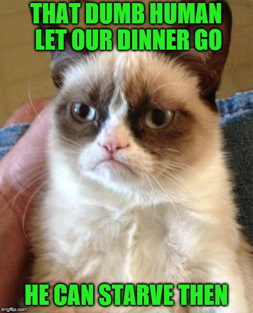 Grumpy Cat Meme | THAT DUMB HUMAN LET OUR DINNER GO HE CAN STARVE THEN | image tagged in memes,grumpy cat | made w/ Imgflip meme maker