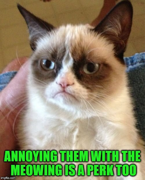 Grumpy Cat Meme | ANNOYING THEM WITH THE MEOWING IS A PERK TOO | image tagged in memes,grumpy cat | made w/ Imgflip meme maker