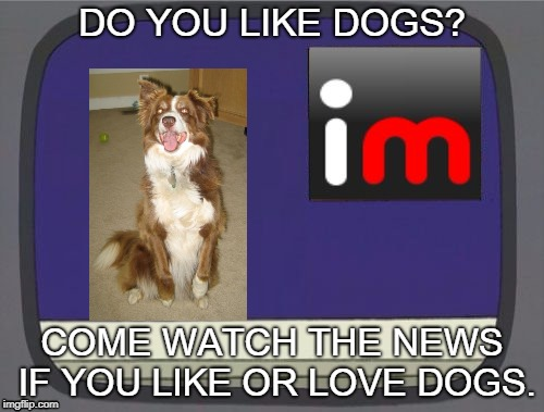 imgflip news | DO YOU LIKE DOGS? COME WATCH THE NEWS IF YOU LIKE OR LOVE DOGS. | image tagged in imgflip news,chili,chili the border collie,dogs,border collie | made w/ Imgflip meme maker