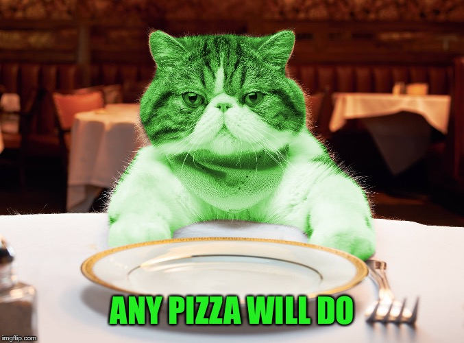 RayCat Hungry | ANY PIZZA WILL DO | image tagged in raycat hungry | made w/ Imgflip meme maker