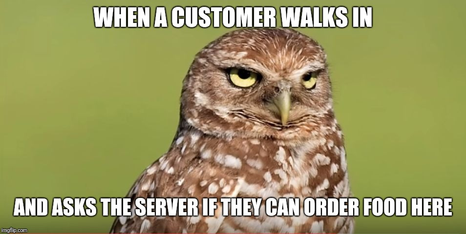Death Stare Owl |  WHEN A CUSTOMER WALKS IN; AND ASKS THE SERVER IF THEY CAN ORDER FOOD HERE | image tagged in death stare owl | made w/ Imgflip meme maker