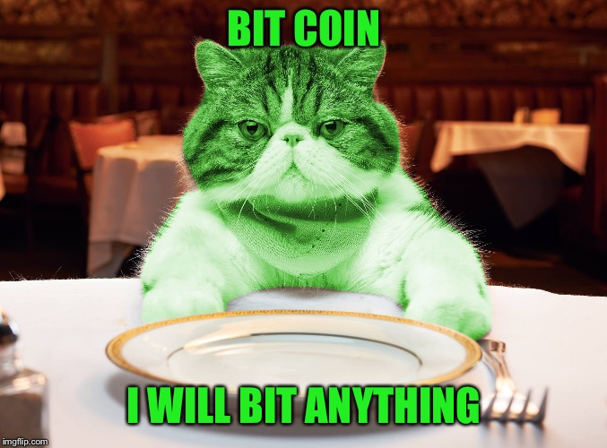 RayCat Hungry | BIT COIN I WILL BIT ANYTHING | image tagged in raycat hungry | made w/ Imgflip meme maker