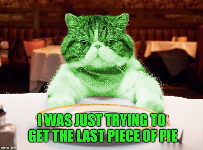 RayCat Hungry | I WAS JUST TRYING TO GET THE LAST PIECE OF PIE | image tagged in raycat hungry | made w/ Imgflip meme maker